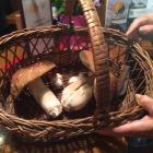 E' arrivata la stagione dei funghi!!!